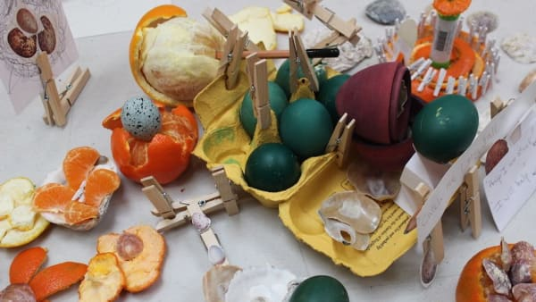 there are eggs that are dyed green in a yellow egg box alongside clothes pegs, orange peel and honesty
